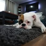Marketing Tips for Your Carpet Cleaning Business